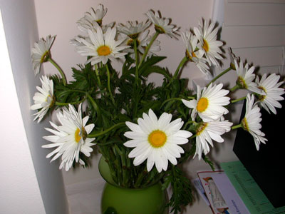 Daisies in a vase