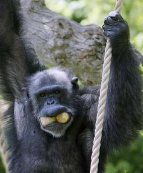 Rome Zoo - Ape