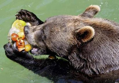 Rome Zoo - Bear