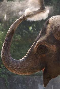 Rome Zoo - Elephant