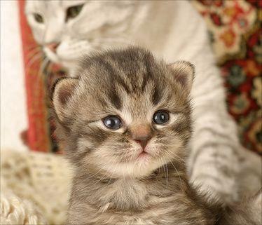 cat & kitty